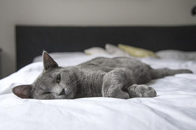 kočka na posteli.jpg