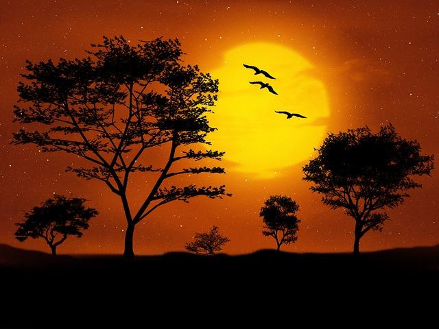 ptáci nad stromy